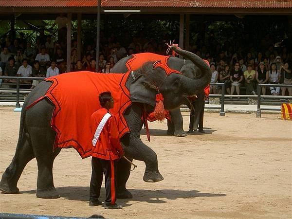 大象表演射飛鏢