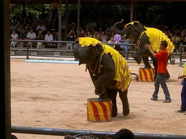 就是大象表演啊...