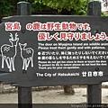 宮島的特色-野生鹿唷