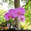 園區蘭花向您微笑!