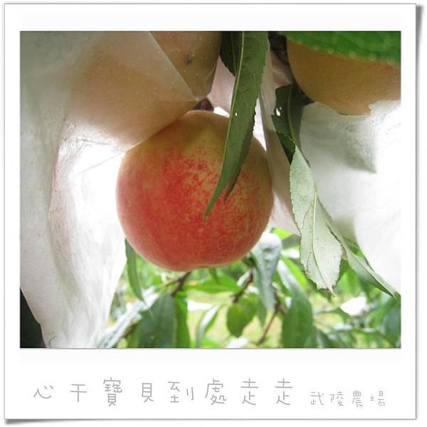 武陵之水蜜桃1.jpg