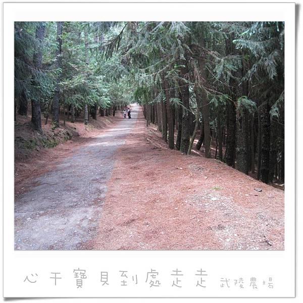 武陵之林.jpg