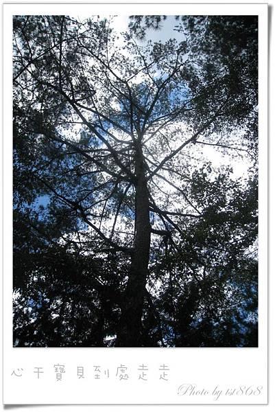 武陵之林2.jpg