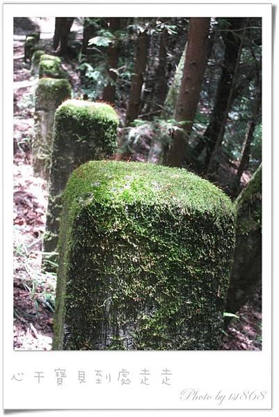 武陵之林間.jpg