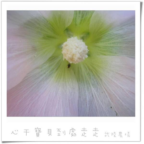 武陵之花.jpg