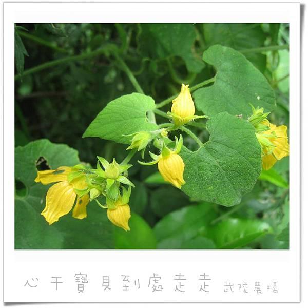 武陵之花2.jpg
