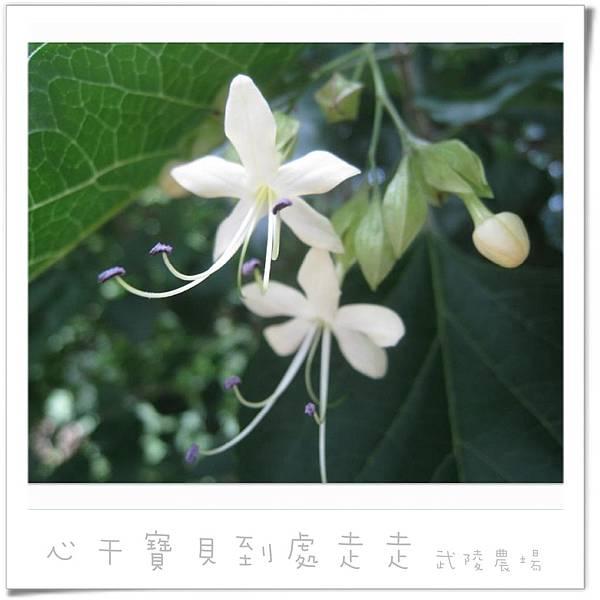 武陵之花3.jpg