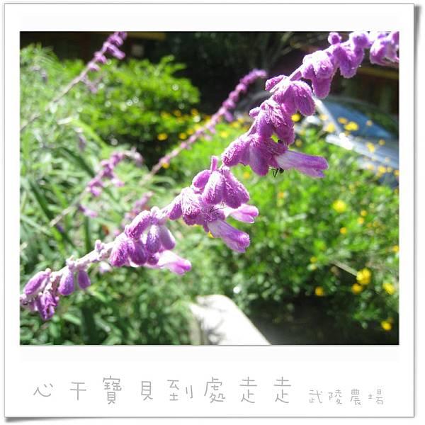 武陵之花5.jpg