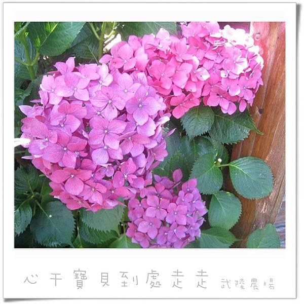 武陵之花6.jpg