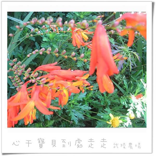 武陵之花7.jpg
