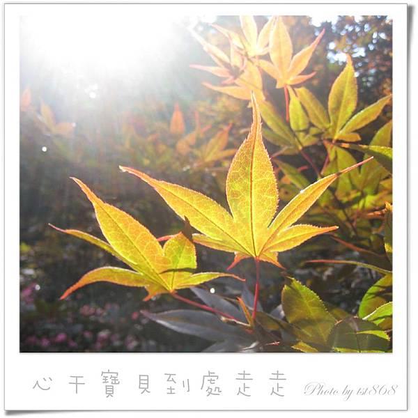 武陵之楓1.jpg