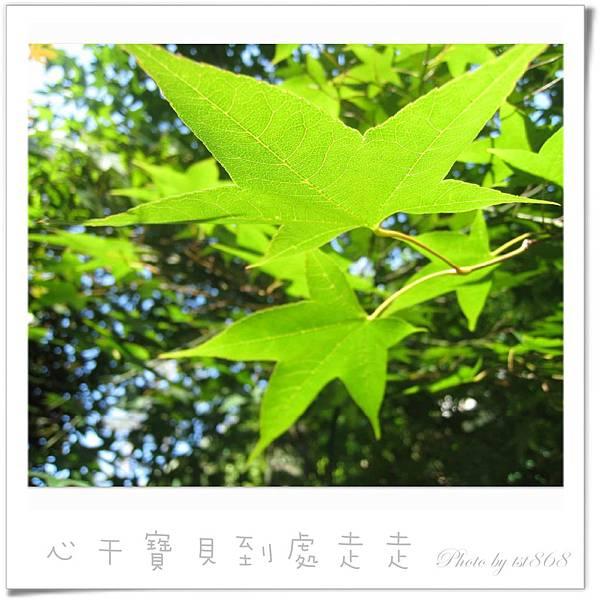 武陵之楓2.jpg
