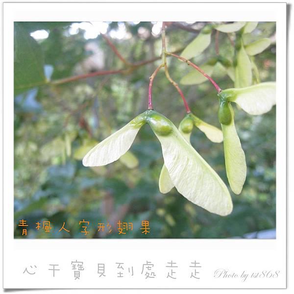 武陵之楓3.jpg