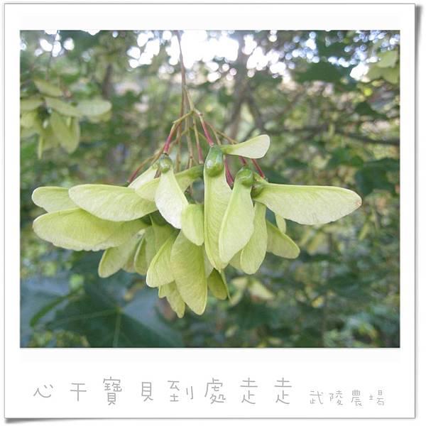 武陵之楓4.jpg