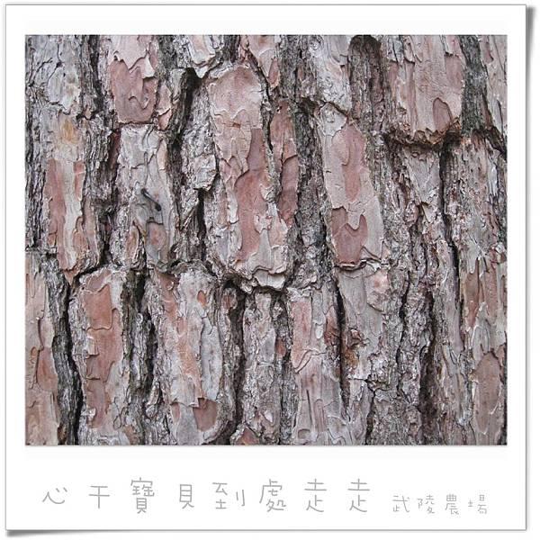武陵之樹.jpg
