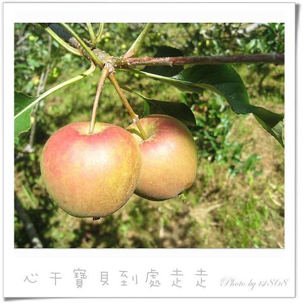 武陵之蘋果.jpg