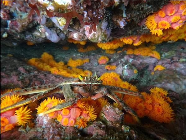 螃蟹& 海葵