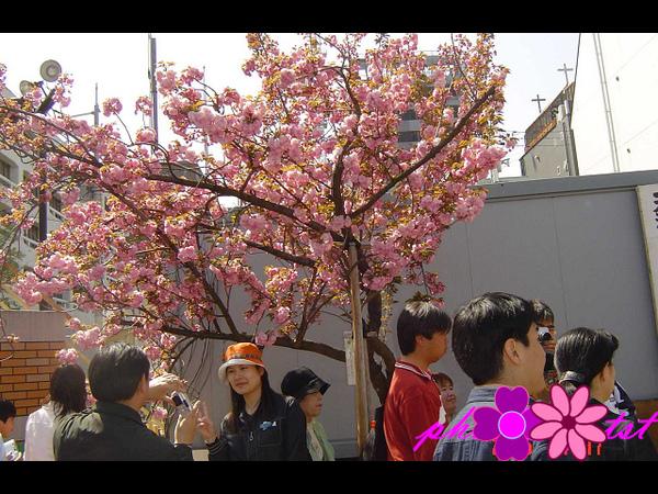 大阪造幣局 (1).jpg