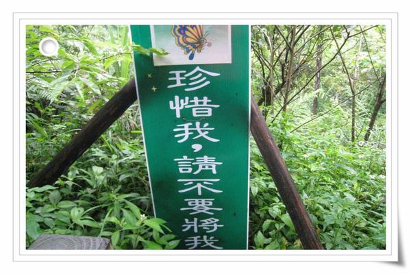 9904土城油桐花1 (26)(001).jpg