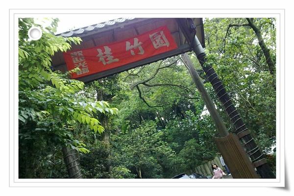9904土城油桐花 (6)(001).jpg