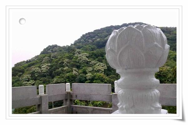 9904土城油桐花 (49)(001).jpg