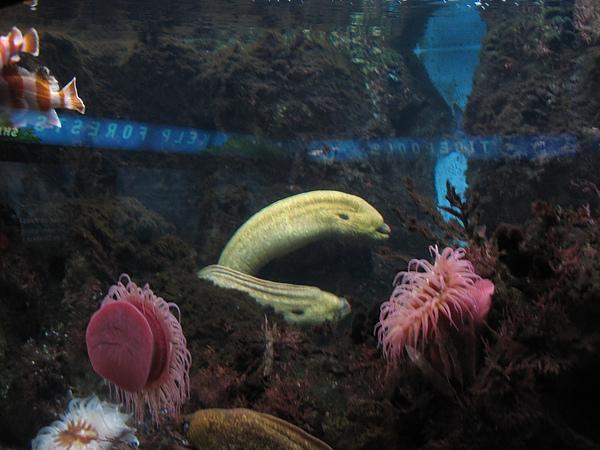 芝加哥downtown水族館022611 030.JPG