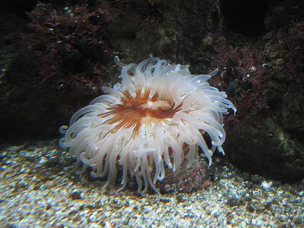 芝加哥downtown水族館022611 032.JPG