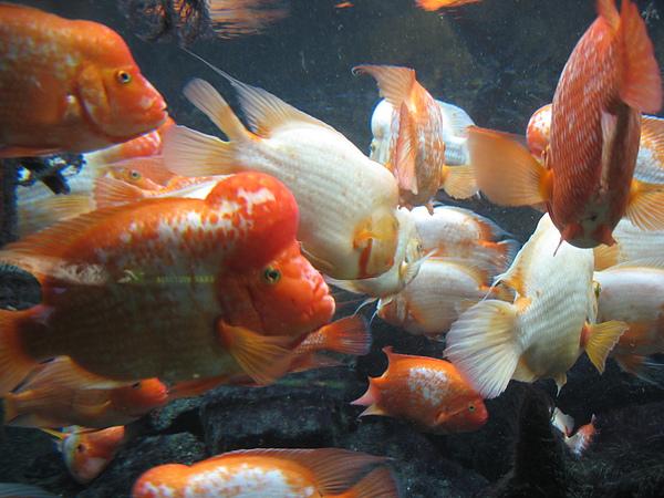 芝加哥downtown水族館022611 066.JPG