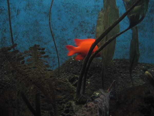 芝加哥downtown水族館022611 042.JPG