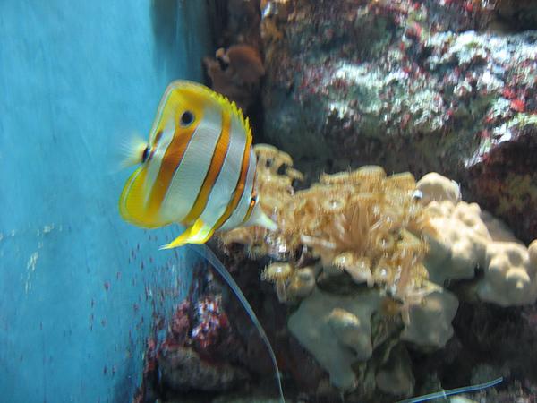 芝加哥downtown水族館022611 055.JPG
