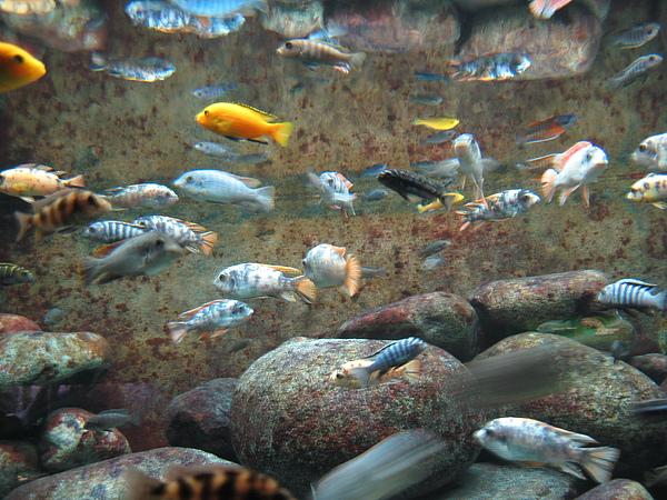 芝加哥downtown水族館022611 073.JPG
