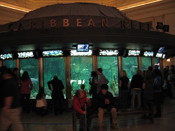 芝加哥downtown水族館022611 092.JPG