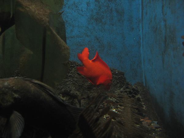 芝加哥downtown水族館022611 043.JPG