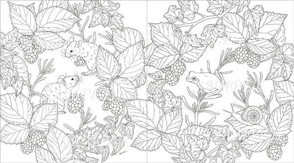 Garden Coloring Book -2.jpg