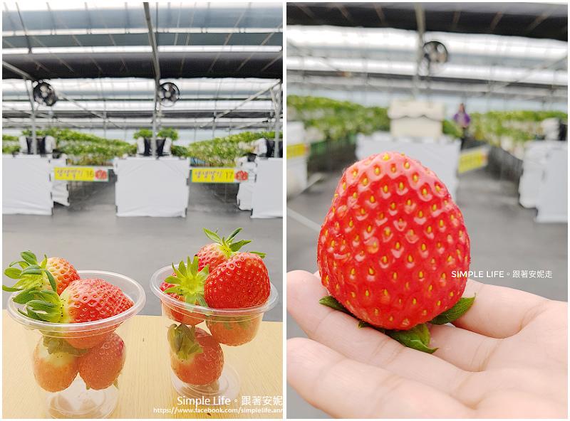 採草莓-1.jpg