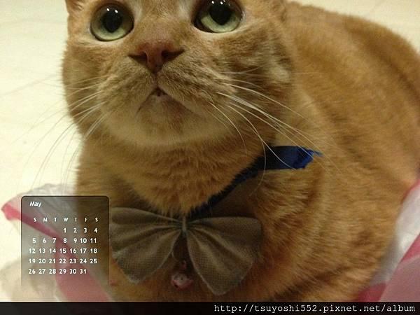 布丁貓桌布