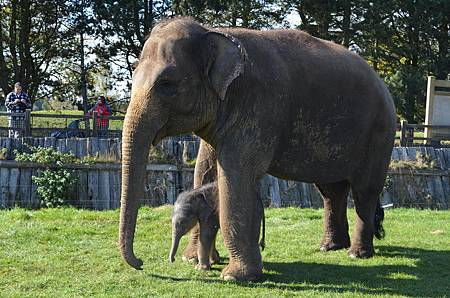 uk baby elephant two