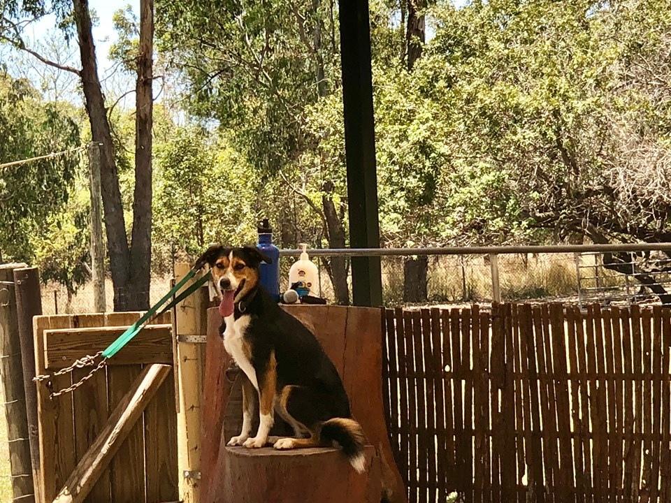 澳洲動物園; 澳洲無尾態; 龍柏動物園; 澳洲袋鼠; 澳洲自由行; 布里斯本動物園
