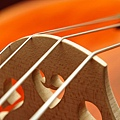 Cello-01.JPG