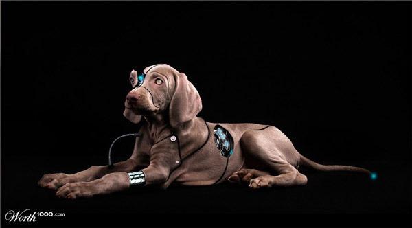 wirelessdoggie.jpg