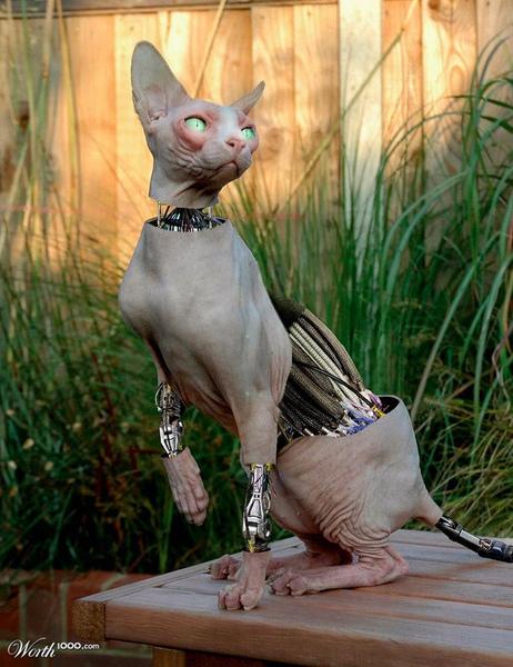 cybercat.jpg