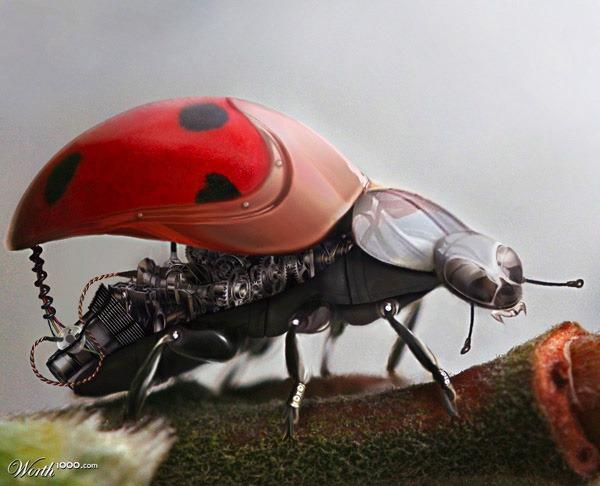 ladycybug.jpg