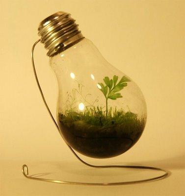 light_bulb_terrarium.jpg