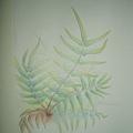 粗毛鱗蓋鳳尾蕨