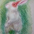 紅眼殺人兔