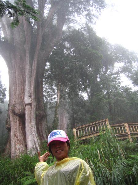 反正他們都是幾千歲的樹啦!!!!
