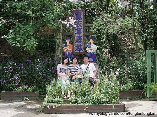 台中新社紫色薰衣草森林