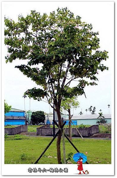 雲林斗六梅林溪河岸公園