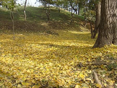 好美的落葉