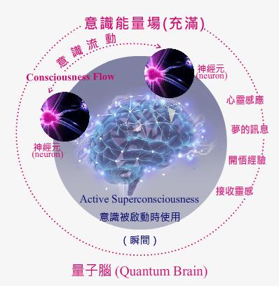 量子大腦.png